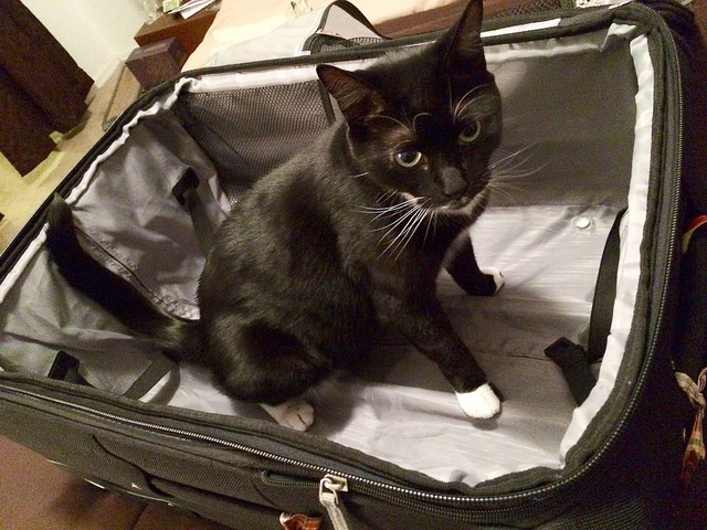 """Cats are cute, but they don't belong in your carry-on. Photo Credit: """"Kevin in the Suitcase"""" © 2014 by Sam Howzit (CC BY 2.0)"""