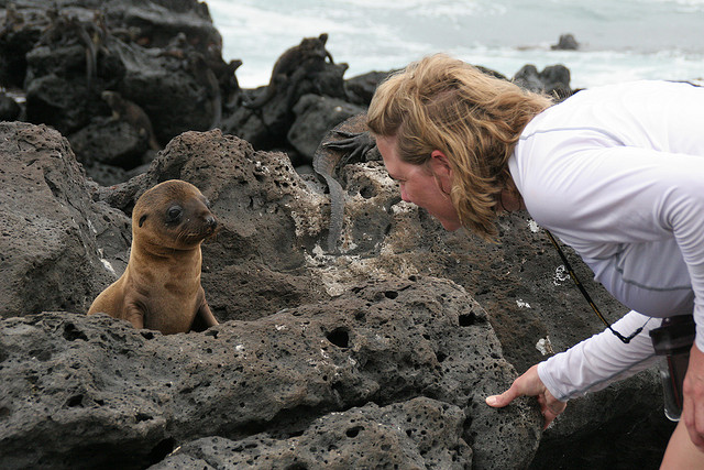"""This little cutie is just one of many Galapagos animals that will charm you and your family. Photo Credit: """"Galapagos Islands"""" © 2009 by Michael R. Perry (CC BY 2.0)"""