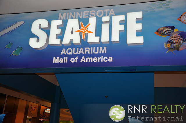 Mall of America Sea Life Aquarium